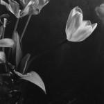 sfioritura-di-primavera_particolare